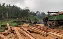 Mật phục 'công trường khai thác gỗ' trong rừng phòng hộ, thấy gì?