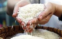 'Loạn' giống lúa dỏm - Kỳ 3: Phải bảo vệ danh tiếng gạo Việt Nam