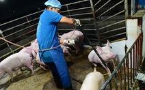 Luật mới từ 1-1-2020: Phải đối xử nhân đạo với vật nuôi