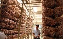 Giữ danh tiếng nông sản Việt: Giống tốt thôi chưa đủ!
