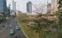TP.HCM phát động trồng cây tạo mảng xanh làm đẹp thành phố dịp tết