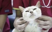 Dân Singapore bỏ đến vài trăm đôla mua bảo hiểm cho thú cưng