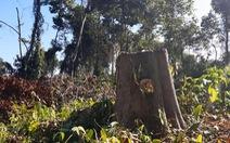 Khu bảo tồn cho phá rừng tự nhiên để… trồng dược liệu?