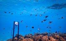 Mở 'nhạc' dưới biển để hồi sinh san hô