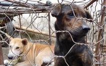 Cấm thịt chó, chính quyền ở Indonesia bảo dân ăn 'bò, gà ngon hơn'