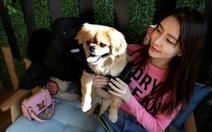 Không sinh con, người Trung Quốc đổ tiền cho thú cưng