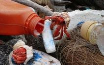 Hàng nghìn con cua ẩn sĩ chết vì bị mắc kẹt trong chai nhựa