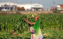 Tất cả nông dân Ấn được hỗ trợ tiền mặt