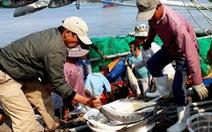 Đi biển đầu năm, ngư dân Quảng Trị trúng hơn 5 tỉ đồng cá bè vàng