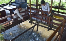Lão nông dụ cá vào ngắm như 'thú cưng' được bộ trưởng tặng bằng khen