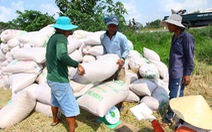 Vẫn có thể xuất khẩu 6 triệu tấn gạo