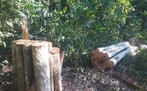Điều tra hai vụ phá rừng dịp Tết Nguyên đán