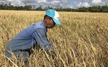 Chính phủ sẽ bàn việc tiêu thụ lúa cho nông dân