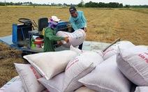 """Lúa gạo nhiều, giá giảm: Không thể """"giải cứu"""" mãi"""