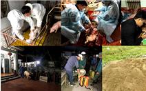 Thủ tướng yêu cầu khống chế dịch tả lợn châu Phi