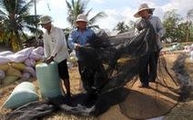 Giá lúa nhích lên, nông dân vẫn khó bán