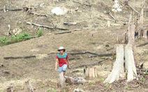Khởi tố 4 cán bộ cấp đất sai cho gia đình nguyên bí thư Huyện ủy