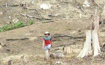 Khởi tố nguyên phó chủ tịch huyện hợp thức hóa đất rừng cho vợ