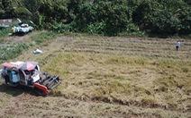 Đối sách các nước tiêu dùng thay đổi, gạo Việt gặp áp lực
