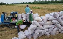 Giảm lãi suất cho vay tiêu thụ lúa xuống mức thấp nhất