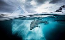 Mê mẩn ảnh đẹp đại dương năm 2019