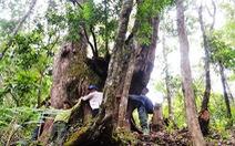 Tây Giang gìn giữ rừng xanh - Kỳ 5: 'Đội kiểm lâm làng'