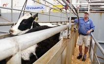 Vinamilk nhập thêm bò, hướng tới chủ động nguyên liệu