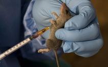 93 người thiệt mạng do dịch sốt xuất huyết Lassa bùng phát ở Nigeria