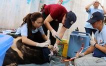 Giao 3 con gấu nuôi nhốt gần 20 năm cho trung tâm cứu hộ