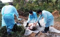 Dịch tả heo châu Phi lan tới Thừa Thiên - Huế, giám sát chặt xe chở heo vào Nam