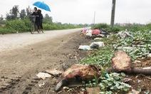 Đóng cửa lò giết mổ gia súc lớn nhất TP Vinh do ô nhiễm