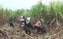 Bộ trưởng khuyên doanh nghiệp dùng bã mía trồng nấm