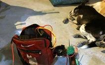 Bắt thanh niên trộm chó bán lấy tiền mua ma túy