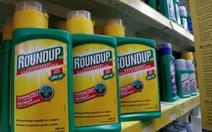 Việt Nam cấm nhập khẩu thuốc trừ cỏ có hoạt chất Glyphosate