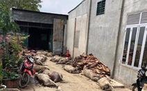 Phạt người tung tin dịch tả heo ở Đắk Nông 10 triệu
