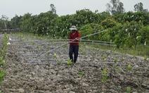 'Cơn sốt' mít Thái và câu chuyện thị trường