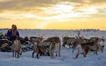 Homestay với người Sami ở Bắc Âu