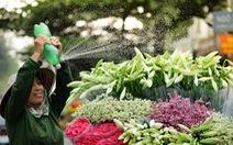 Hoa loa kèn gọi tháng 4 khắp phố phường Hà Nội