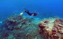 Nắng nóng đang tàn phá hệ sinh thái đại dương
