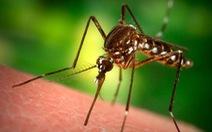 Tìm ra thuốc chống sốt rét