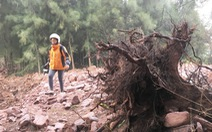 Yêu cầu kiểm điểm vì để dân làm đầm tôm phá rừng phòng hộ