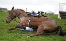 'Dựng tóc gáy' với cú ngã ngựa kinh hoàng ở cuộc đua Wincanton