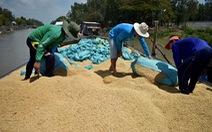 'Gờ giảm tốc' thay vì cứu giá lúa