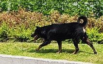 Chó nuôi xông vào trường cắn 6 học sinh