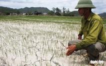 Cách chức một chủ tịch xã 'ăn chặn' tiền hỗ trợ lúa bệnh