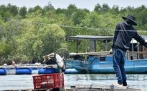 Hàng chục tấn cá bè Long Sơn chết