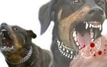 Chó dại cắn 5 người, con gái chủ nhà phải nhập viện