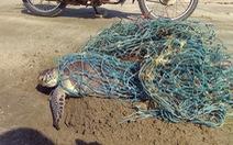 Giải cứu rùa biển nặng 10kg mắc lưới thải
