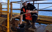 Giải cứu chú chó bơi lạc gần giàn khoan cách bờ 210km