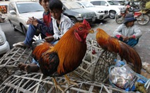 Campuchia phát hiện cúm gia cầm H5N6 tại tỉnh giáp Việt Nam